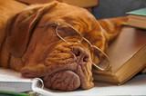 Dog Education