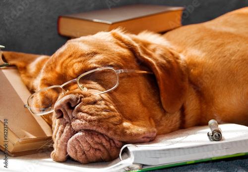Dog Fell Asleep