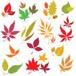 Set of vector colorful autumn leafs design elements.
