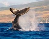 Fototapete Awesome - Schön - Meeressäuger