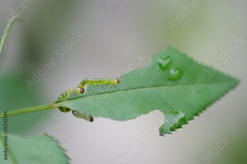 矢印と幼虫