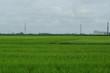 工場と田んぼ