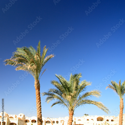 arabian houses and palms