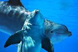 Delfini in compagnia