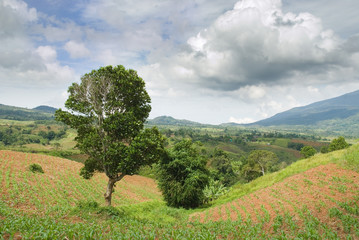 Tropical plateau with cornfields