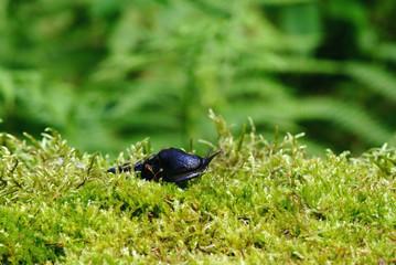 slug on green moss