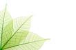 Nervures feuilles vertes