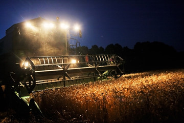 Combine Harvester in the Cornfield 07