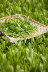 茶畑と茶葉