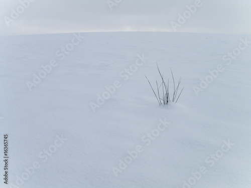Grass in snowy field