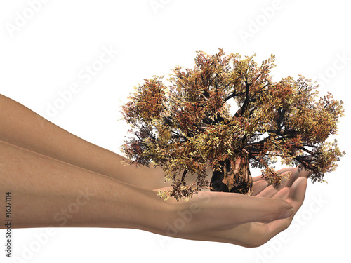 brown 3D baobab tree held in hands by an adult male