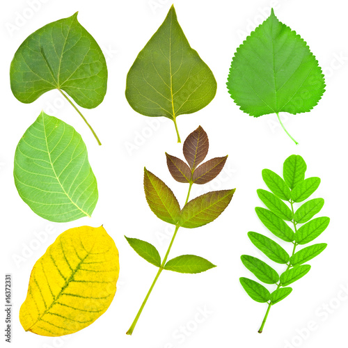 Set of various leaves of trees and plants