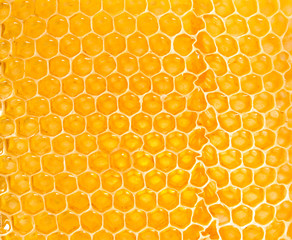 yellow honeycomb