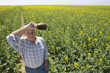 Farmer wiping brow in sunny rape seed field