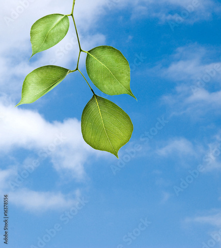 Branch on sky background