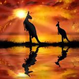 kangaroo on a beautiful sunset background