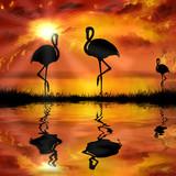 flamingo  on a beautiful sunset background