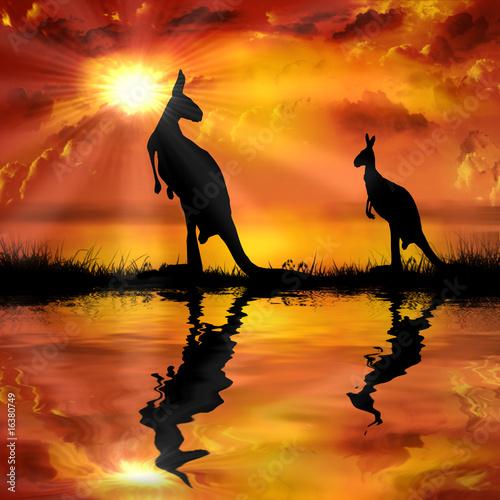 kanguru-auf-einem-schonen-sonnenuntergang-hintergrund