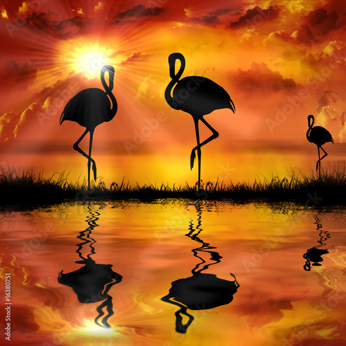 flamingo  on a beautiful sunset background
