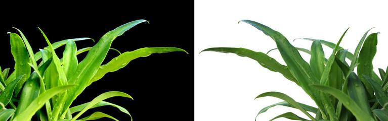 plants d'agaves en positif et en négatif