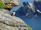 skellig island puffin enjoying the view