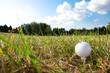 golf-ball on green grass