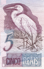 great egret (Ardea alba) on 5 Real banknote from brazil