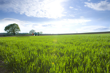 Sun shining over tractor in young wheat field