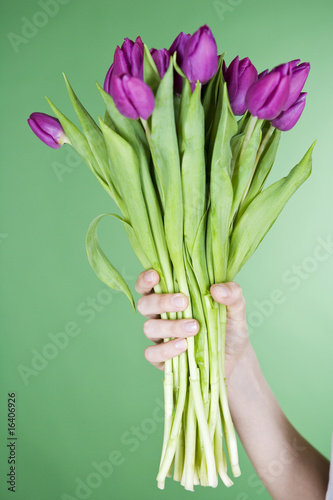 A woman holding a bunch of purple tulips, close-up