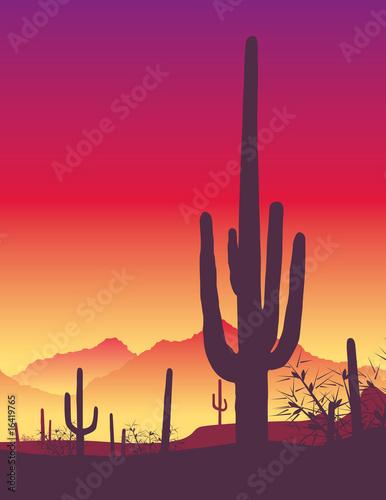 Cactus - sunrise - 16419765