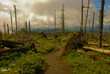 Powalone drzewa - 16419904
