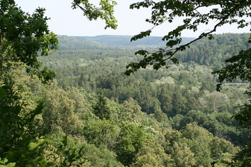 view on forests