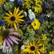 Heilpflanzen, Arrangement