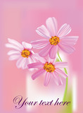 beautiful cosmos flowers on pink background vector poster