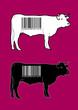 Vaches codes-barres, vecteurs