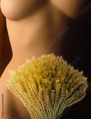 Wheat bunch on woman's belly