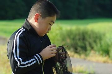 虫を捕る少年