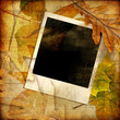 autumn background with instant frame