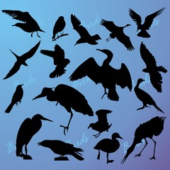 Silhouettes of the birds on turn blue