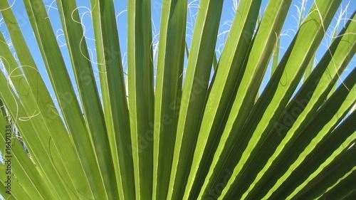 Papiers peints Palmier Palmier