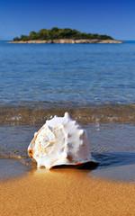 Seashell on Mediterranean beach