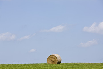 Rolled bale of hay in a field
