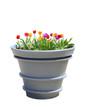 Tulip iBig Pot