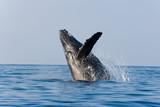 Fototapete Durchbrechen - Erstaunen - Meeressäuger
