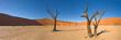 desert trees - 16500552