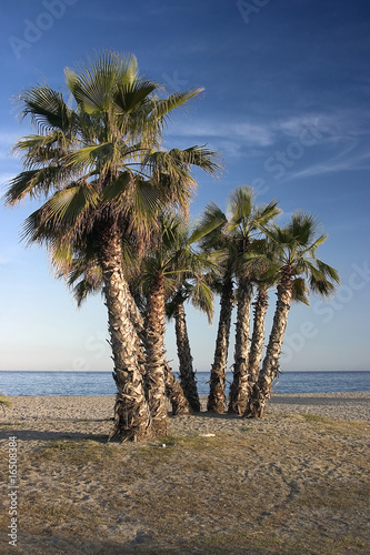 palms on the empty beach