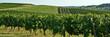 canvas print picture - Coteaux et vignes