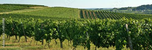 canvas print picture Coteaux et vignes
