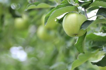 Apple 5