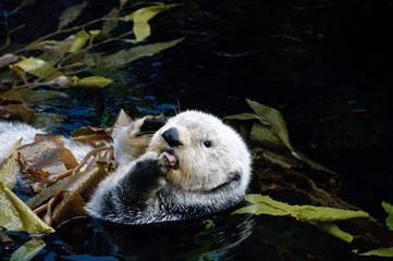 Otter beim Putzen